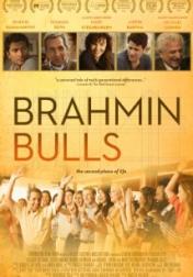 Brahmin Bulls 2013