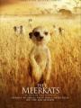 The Meerkats 2008