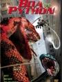 Boa vs. Python 2004