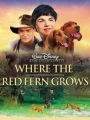 Where the Red Fern Grows 2003