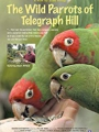The Wild Parrots of Telegraph Hill 2003