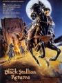 The Black Stallion Returns 1983