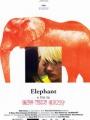 Elephant 2003