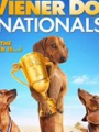 Wiener Dog Nationals 2013