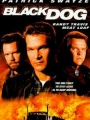 Black Dog 1998
