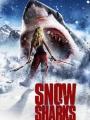 Avalanche Sharks 2013