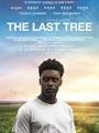 The Last Tree 2019