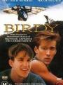 Birdy 1984