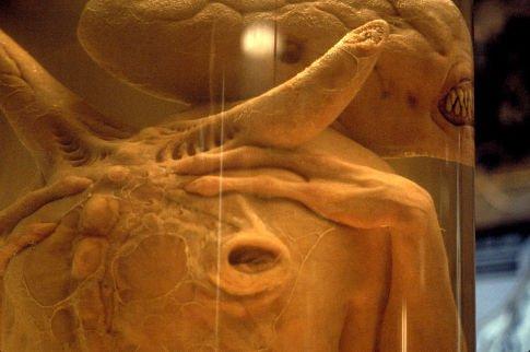 Alien: Resurrection movie download in HD, DVD, DivX, iPad ...
