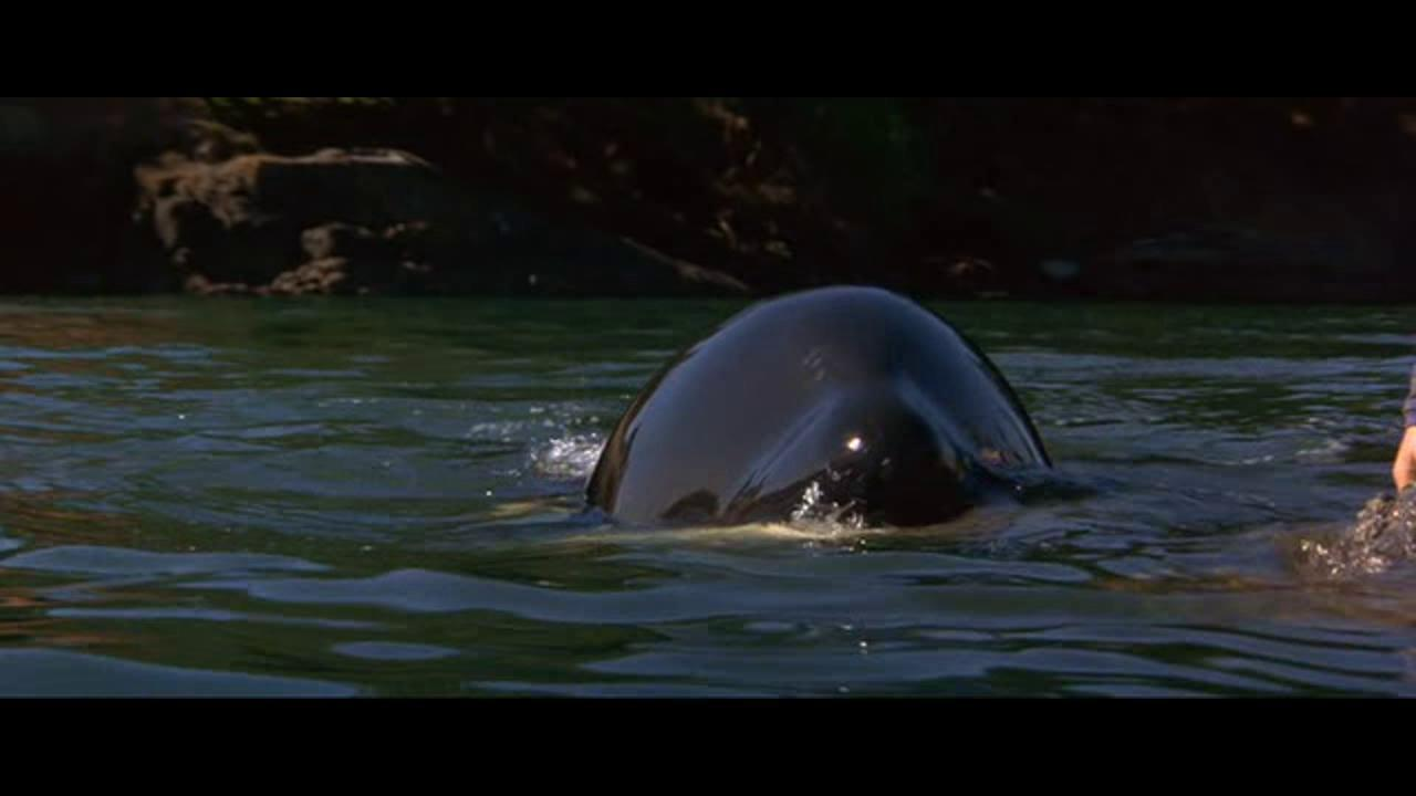 Free Willy 2: The Adventure Home movie download in HD, DVD ...